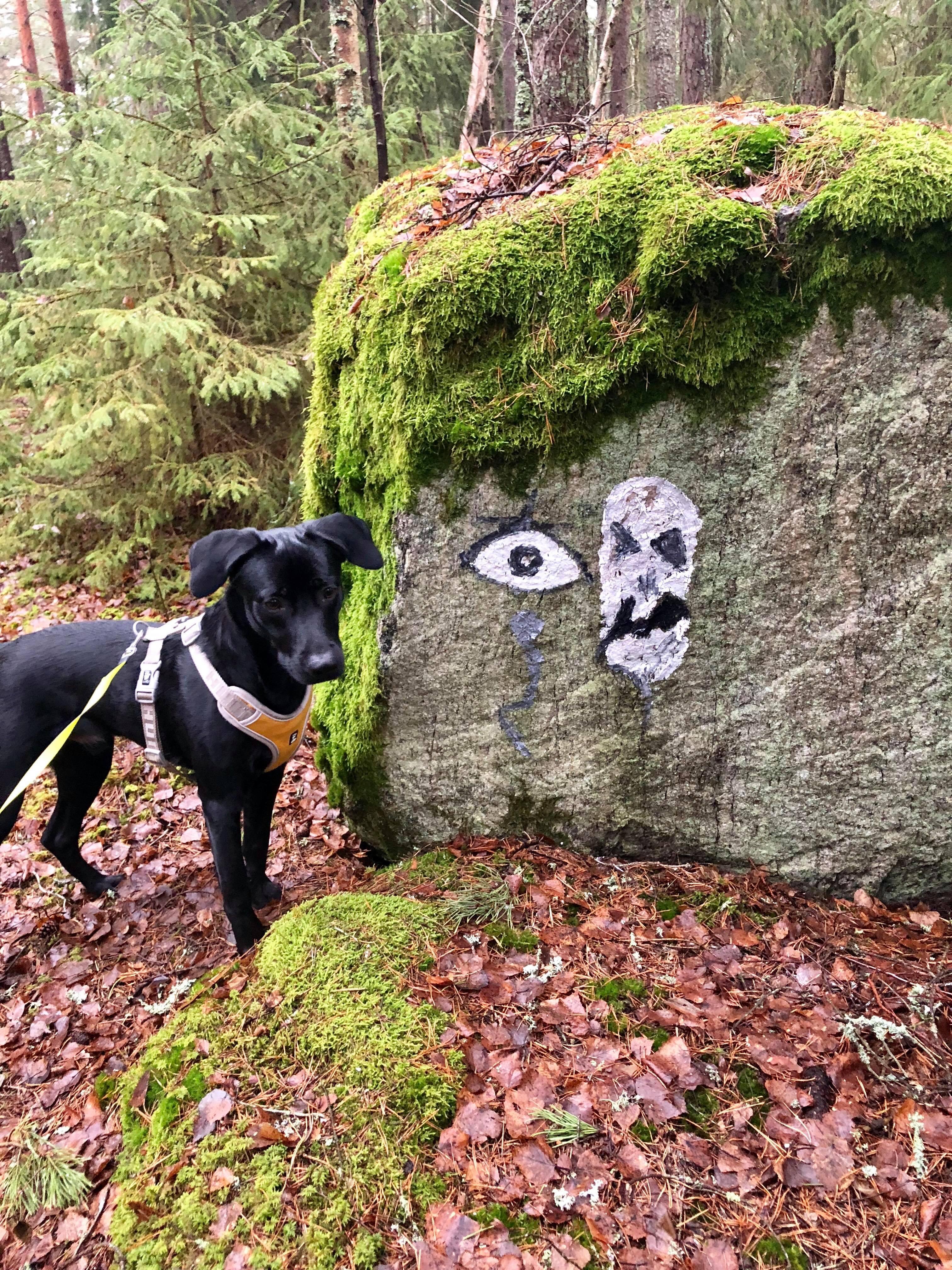 Loui i skogen